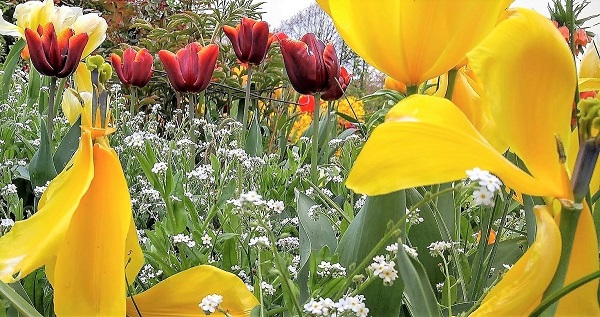 May Flowers at Giverny